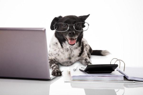 Hundesteuer-Verguenstigung